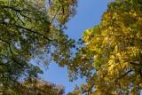 parc-bertin-douai-nature-douaisis-nord-france-c-ad-langlet-2-974