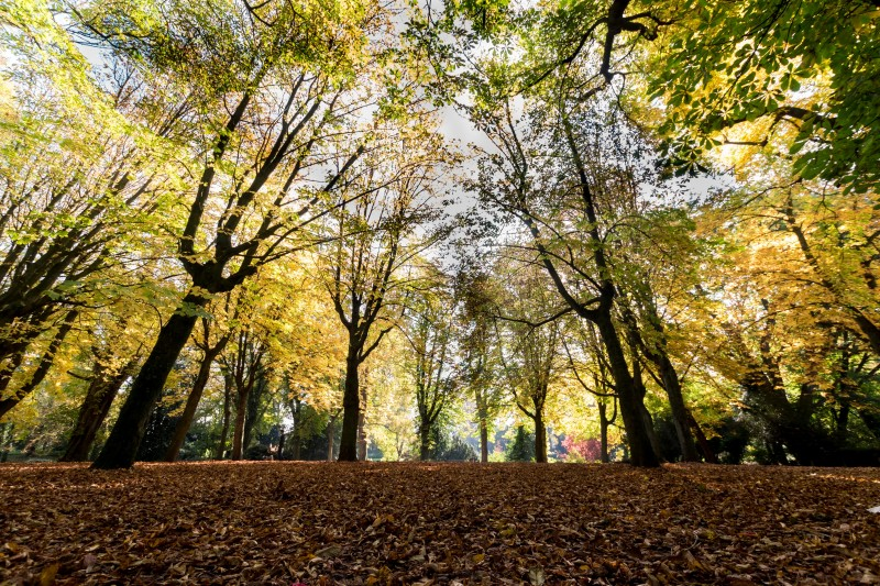 parc-bertin-douai-nature-douaisis-nord-france-c-ad-langlet-1-930